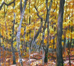 Yellow Canopy_Jeremiah Miller